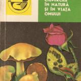 Ciupercile in natura si in viata omului