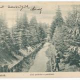Carti Postale Romania pana la 1904 - CFL Ilustrata 1906 Valcele Elopatak jud Hargita - parc