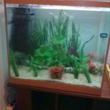 Vand acvariu 310L