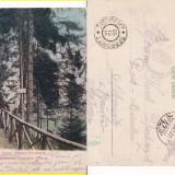 Vatra Dornei (Bucovina, Suceava)- Promenada Ullmann-clasica - Carte Postala Bucovina pana la 1904, Circulata, Printata