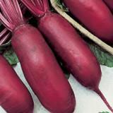 SFECLA ROSIE LUNGA - seminte