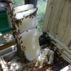 Vand familii de albine - Apicultura