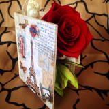 Trandafiri Criogenati, Rosii
