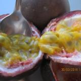 MARACUJA (passiflora edulis) - ARBUST FRUCTIFER EXOTIC - plic cu 10 seminte