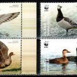 Islanda 2011 WWF, Mi #1298-1301**, gaste, MNH ! - Timbre straine, Natura, Nestampilat
