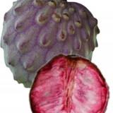 Seminte rare de ILAMA » fructe rare » 2 seminte pt semanat