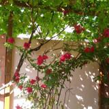 Vila si terenuri de vanzare in Scornicesti, judetul Olt - Casa de vanzare, 100 mp, Numar camere: 4, Suprafata teren: 485