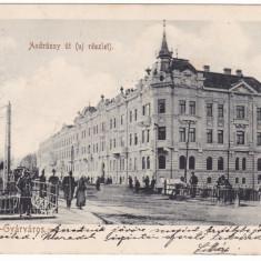 Romania, Temesvar, Timisoara carte post. circul.1902: Str. Andrassy, tram. anim. - Carte Postala Banat pana la 1904, Circulata, Fotografie