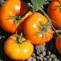 Seminte de rosii portocalii romanesti.