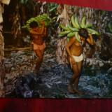 Ilustrata Venezuela 1975 - Culegatorii de Banane, Circulata, Fotografie