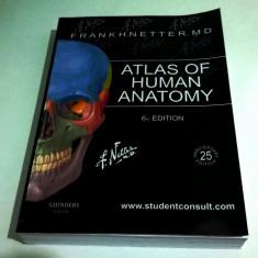 NOU Atlas of Human Anatomy F.H.Netter 6th ed./ Atlas Netter ed.6